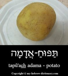 """How to say """"Potato"""" in Hebrew.    Like in French and perhaps other languages, this literally means """"an apple of the ground"""".  Click here to hear it pronounced by an Israeli: http://www.my-hebrew-dictionary.com/potato.php #howtospeakhebrew #hebrewlessons"""