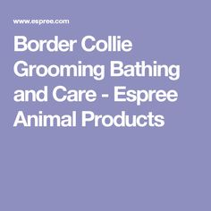 Border Collie Grooming Bathing and Care - Espree Animal Products