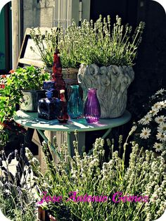 La mesa siempre acompañadada plantas y flores...