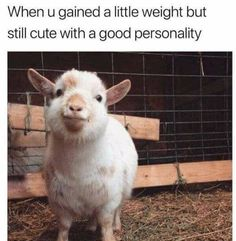 Definitely me except the cute and good personality. - 9GAG