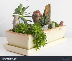 14 best Potted plants and flowers photography images on Pinterest ...