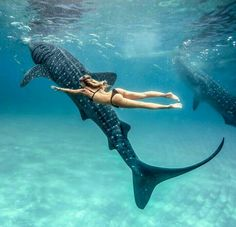Swimming with whale sharks No matter how many photos I see of these guys, they still amaze me! Tag me in YOUR whale shark photos, would love to see them all Photo of taken by Places To Travel, Places To Go, Swimming With Whale Sharks, Cebu City, Underwater Photography, Beauty Photography, Travel Aesthetic, Ocean Life, Adventure Is Out There