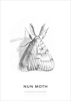 Insects and nature drawings Observational Drawing, Nature Drawing, Moth, Butterflies, Insects, Drawings, Animals, Animales, Animaux