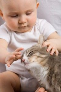 iStock 000005928145XSmall 200x300 Prepare Your Cat For the Arrival of Your New Baby