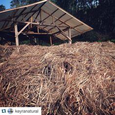 #Repost @keyranatural with @repostapp.  Waste plant material...