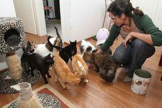PEDRO HITOMI OSERA: Animais exigem adaptações em casa