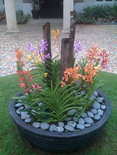 Small Yard Landscaping, Tropical Landscaping, Tropical Garden, Big Potted Plants, Outdoor Plants, Orchid Planters, Orchids Garden, Growing Orchids, Growing Succulents