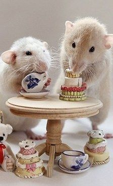 Animals on Pinterest | Rat Toys, Mice and Teddy Bears