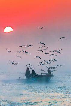 las gaviotas escoltando a los pescadores al final de un dia de pesca