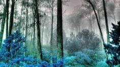 blue_forest-1579446.jpg (1920×1080)