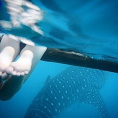 TBT: swimming with whale sharks Christmas 2014! * We lived in Singapore for four years. A really great time!! We traveled a lot with the kids! We saw the most beautiful places..unfortunately this beauty was often spoiled by careless tourists and locals. During our years in Asia we saw amazing beaches and coral reefs full of plastic and other trash. Christmas 2014 we have swum with whale sharks in Cebu, the Philippines. Absolute stunning animals but also threatened by al the trash in the…