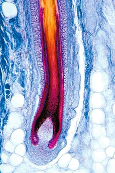 Hair follicles and nails are made of proteins. In fact, about half the stuff in your body is made of protein. Every person has about 500,000 different proteins working at any time. Most serve as switches that turn chemical reactions on and off when needed. Proteins are made by organelles, which also perform other jobs, such as turning food into energy and moving molecules around. | What's in a Cell? | Kids Discover