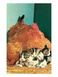 курица и котята/Huhn und Kätzchen - Поиск в Google