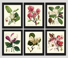 Magnolia Botanical Print Set of 6 Antique Beautiful Pink Violet White Blooming Flowers Garden Tree Plant Nature Home Room Decor Wall Art Unframed. Beautiful set of 6 prints based on antique botanical illustrations. Wonderful details, colors and natural history feel. • The prints measure 4x6, 5x7, 8x10, or 11x14 inch. based on your selection come with a white border for easy framing. • Printed on professional artist archival matte paper. • The prints are part of Amazon Handmade program and...