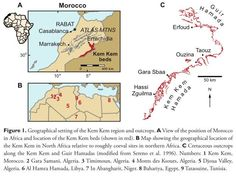A long-known but under-studied deposit of Cretaceous rock on the edge of the Sahara desert was more than just an ancient stomping ground for dinosaurs, according to a comprehensive new paper. Spinosaurus Aegyptiacus, Desert Sahara, Fossil Hunting, Prehistoric Animals, Vertebrates, Science Nature, Quantum Physics, Earth, History