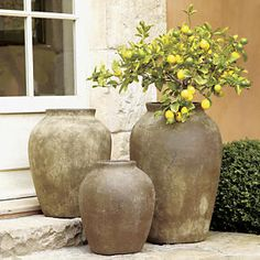 Olive Jars in Garden, Patio | Crate and Barrel