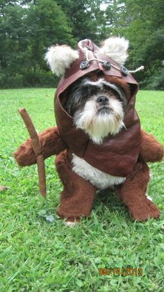Ewok dog @Amy Lyons Lyons Lyons Lyons Lyons Lyons Lyons Shamy too bad the puppies won't let you dress them.