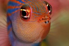 So many pretty colors (30 pictures) CLICK HERE - The Ocean VoyagerThe Ocean Voyager Underwater Creatures, Underwater Life, Ocean Creatures, Beautiful Sea Creatures, Animals Beautiful, Regard Animal, Fauna Marina, Life Under The Sea, Salt Water Fish