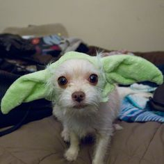 "19 Dogs Dressed As Your Favorite ""Star Wars"" Characters"