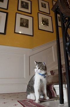 Larry the cat arrives at Downing Street - in pictures