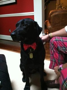 We just love seeing dogs in our ties. #SouthernProper