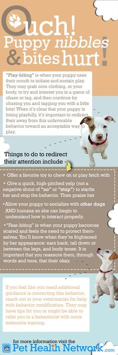 OUCH! Puppy nibbles & bites hurt - here's what to do to redirect that behavior!