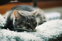 tired kitty