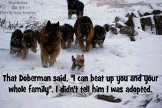 german shepherd love quotes - Yahoo Image Search Results