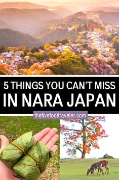 5 Things You Cannot Miss in Nara, Japan. Here is my list of the best things to do in Nara, Japan. Visit the Nara Deer Park, the gorgeous shrines, the flower fields and Japan Travel Tips, Asia Travel, Travel Guide, Travel Plan, Travel Abroad, Japanese Travel, Japanese Geisha, Japanese Kimono, Go To Japan