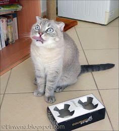 Journal d'un chat : les aventures d'Eirwena: Double jeu !