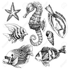 Vector - Fish, sea horse, marine life hand drawn set. Sea life vector sketch