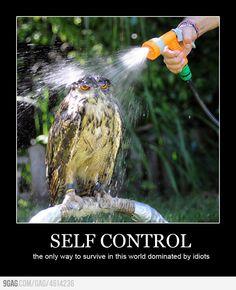 Irritated owl
