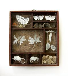 Naturalist's Cabinet Mixed Media Shadow Box Original by hexes