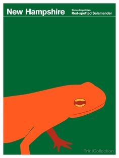 Ebern Designs 'New Hampshire Salamander' Graphic Art Print on Wrapped Canvas Size: H x W x D Voyage Usa, Pop Art, Illustrations, Art Themes, Art Design, Artist Canvas, New Hampshire, Travel Posters, Canvas Art Prints