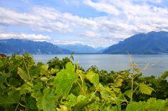 La Suisse et ses champs de vigne avec la vue sur le Lac Léman  www.thedailyofsara.blogspot.ch Champs, Mountains, Nature, Travel, Lake Geneva, Vine Yard, Switzerland, Naturaleza, Viajes