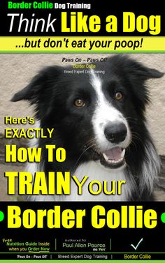 Border Collie Dog Training - Think Like a Dog, But Don't Eat Your Poop! Here's EXACTLY How To TRAIN Your Border Collie.