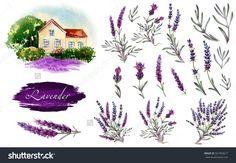 Big lavender illustration set. Provence lavender landscape, flowers and bouquets in watercolor.