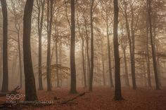 The magic Forest by ValeriaSanton. Please Like http://fb.me/go4photos and Follow @go4fotos Thank You. :-)