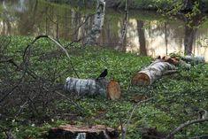 Omenaminttu: Rouheinen vuokaleipä Texture, Wood, Crafts, Surface Finish, Manualidades, Woodwind Instrument, Timber Wood, Wood Planks, Trees