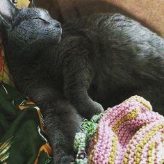 #knitting #kitty #strangerthings #lazy