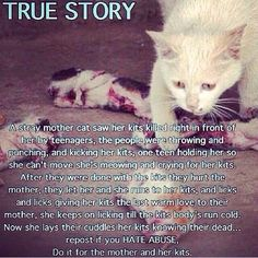 Repost if you hate animal abuse