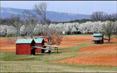 Tobacco barns in North Carolina