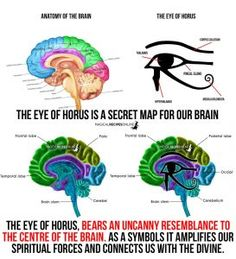 third eye and the eye of Horus - pineal gland
