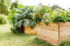 Istutusten ja nurmikon rajaus - Kotipuutarha Diy And Crafts, Flowers, Plants, Veggie Gardens, Koti, Garden Ideas, Gardening, Vegetable Gardening, Vegetables Garden