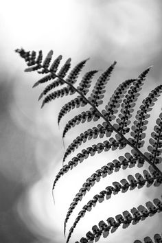 New free photo from Pexels: https://www.pexels.com/photo/grayscale-photo-of-even-pinnate-leaf-203997/ #light #black-and-white #pattern