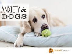 Sad Dog Stories, Mental Illness Awareness Week, Dog Stress, Train Activities, Dog Anxiety, Dog Training Tips, Happy Dogs, Your Dog, Labrador Retriever