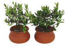 Tuscan Herb Pots on brightboldbeautiful.com