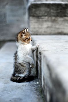 A little cat on stairs next to a mosque in Istanbul, Turkey.