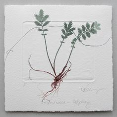 Lynn Bailey . Silver Weed . monotype with plant, thread and blind embossed plate . Paper size 15cm x 15cm