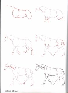 A website that gives info on horses, competitions, games, fun and much more to all the horse lovers out there! Horse Pencil Drawing, Horse Drawings, Cartoon Drawings, Animal Drawings, Easy Drawings, Pencil Art, Drawing Skills, Drawing Techniques, Drawing Art